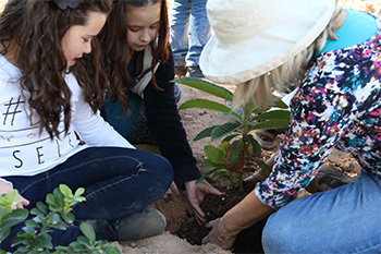 Photo of Students Planting Tree